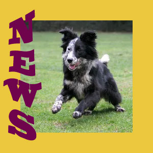 animal welfare news