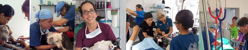 sterilization clinic