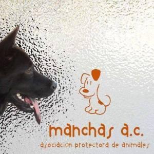 manchas animal rescue in Manzanillo