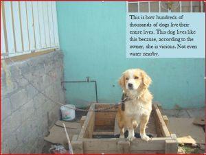 Animal welfare, sterilization, rescue, shelter, adopt