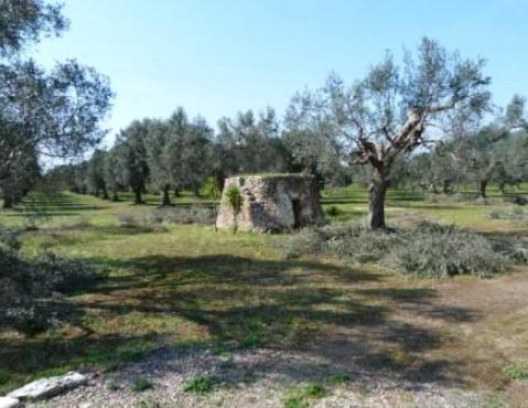 Campagna salentina (ph Gianpiero Colomba)