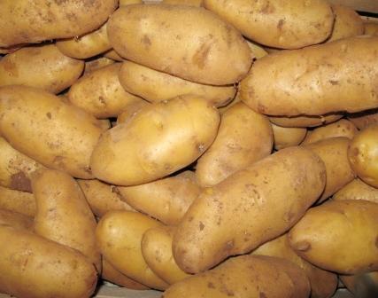 Le patate del Salento