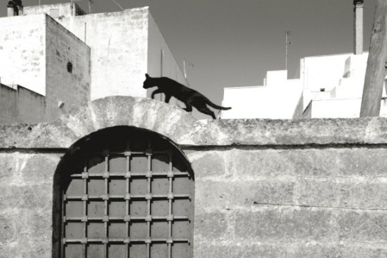 Il gatto sul muro a Castro, di Marcello Moscara