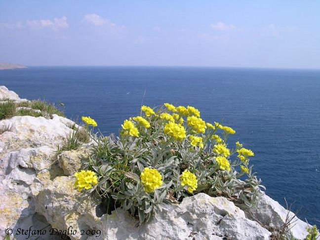 Foto di Stefano Daglio scattata nel marzo 2009 dalla costa adriatica del Salento (da http://www.naturamediterraneo.com/forum/topic.asp?TOPIC_ID=88626)