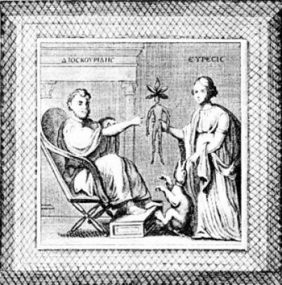 Miniatura dal Dioscoride viennese, codice greco prodotto a Costantinopoli attorno al 512. Vi è raffigurato Dioscoride seduto che allunga la mano per afferrare la mandragora antropomorfa che Euresis gli offre. Un cane morto è legato con una corda al piede destro della pianta