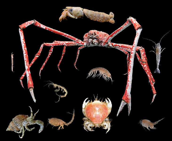 Shrimps and other crustaceans allergy