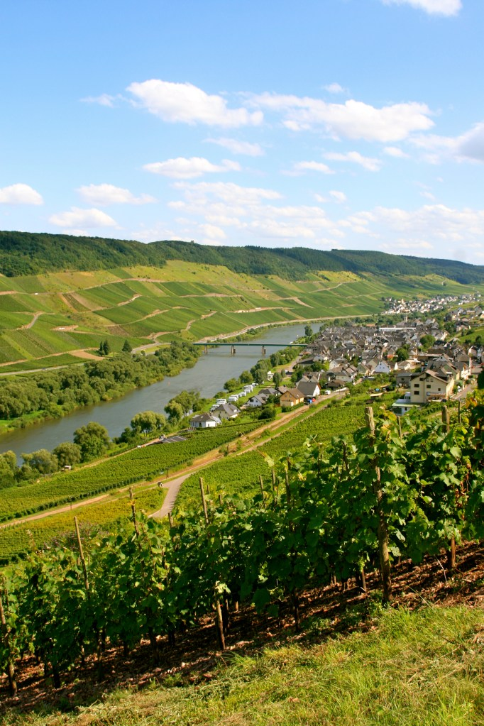 Wines from the Mosel