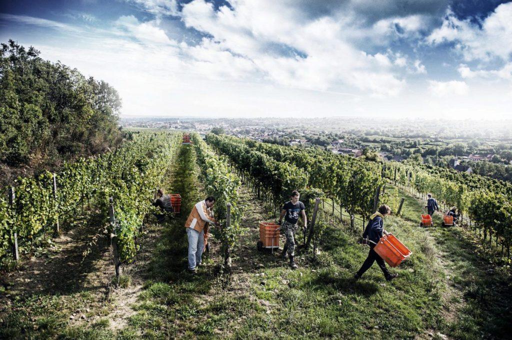 Loimer to release Langenlois 'blanc des blancs' sparkling wine