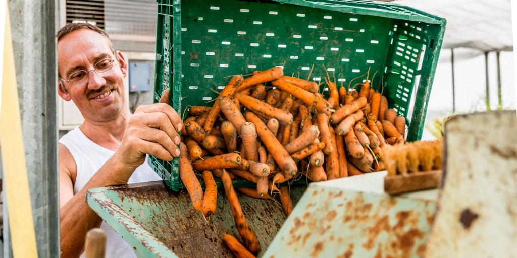 Manfred Urban gibt die Karotten in die Karottenwaschanlage