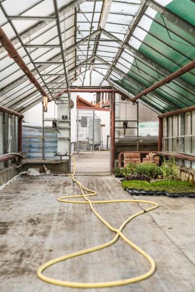 Leeres Gewächshaus, bis auf ein paar Pflanzen