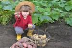 bimbo-con-patate