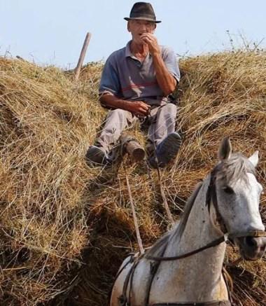 contadino-sul-carro-di-fieno