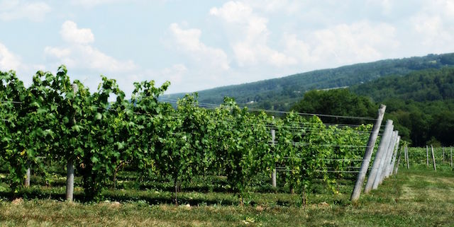 Canadian Wine Spotlight | Benjamin Bridge Winery