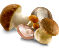 funghi-e1570180513420.png
