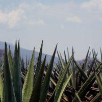 Mezcal Los Siete Misterios - Oaxaca, Mexico