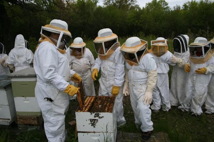 Production of honey