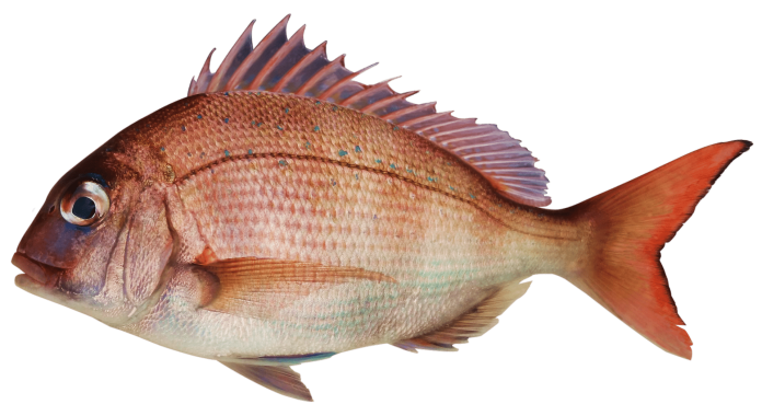 Grilled whole snapper