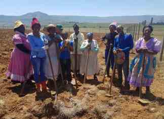 These women farm with dry beans, potatoes and maize in Enhlanhleni near Reichenau Mission. They are part of the Underberg Farmers Association.