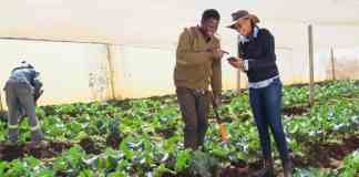 Agripreneur Mbali Nwoko found her passion in farming and is the founder and CEO of Green Terrace, an agricultural business focused on primary crop farming.