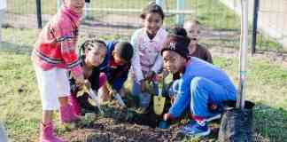 In 2010 Greenpop planted 1 000 trees in a number of townships like Bonteheuwel, Khayelitsha and Delft on the Cape Flats. Since then they've planted more than 100,000 indigenous and fruit trees across Sub-Saharan Africa.