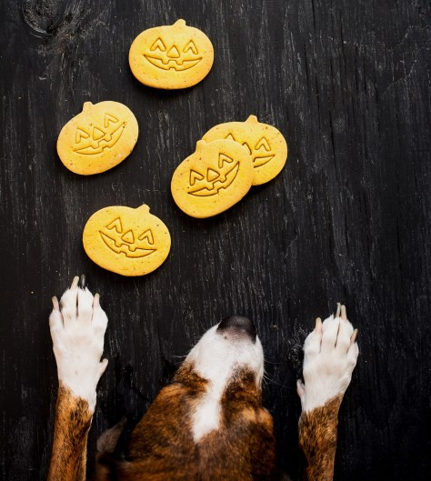 Pumpkin Flaxseed Dog Treats   Whip It Up!