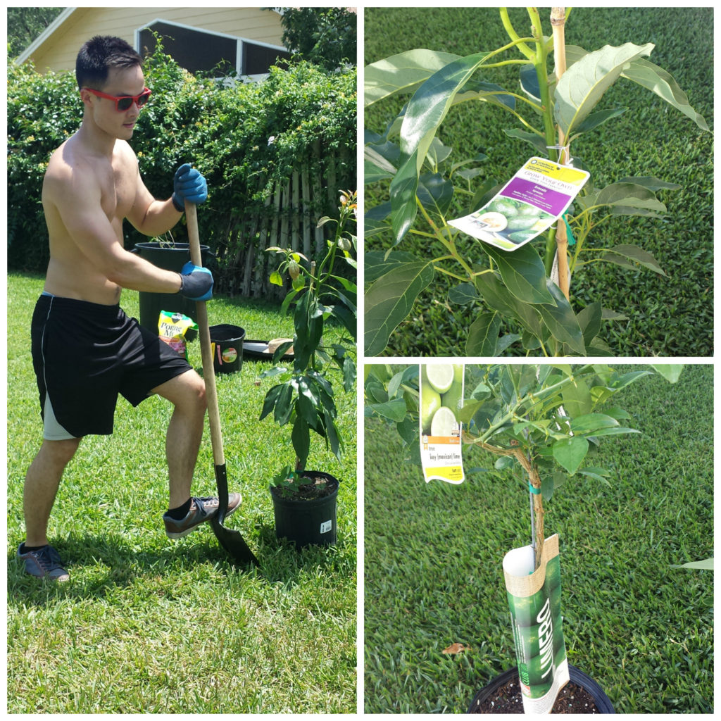 Jeffrey-planting-Salsa-Garden-1024x1024 Best Mango Avocado Salad