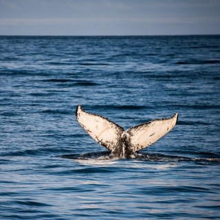 Day 12/22 Iceland: Whale Watching, Æðarfossar, Hverfjall, Mt Bláfjall, Mývatn Nature Baths
