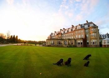 Gleneagles hotel Perthshire scotland gun dog