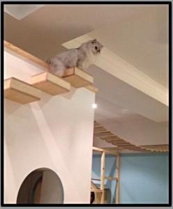 Maison de Moggy cats cat cafe Edinburgh