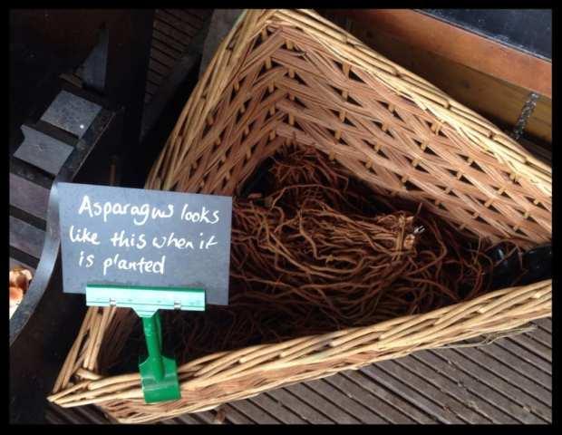 asparagus hut girl glasgow foodie