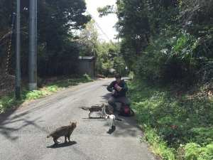 Ishinomaki, tashirojima, cat island, Japan, tsunami, Japan tsunami, 311, cats, neko, cat shrine, travel, travel blog, Glasgow foodie, foodie explorers
