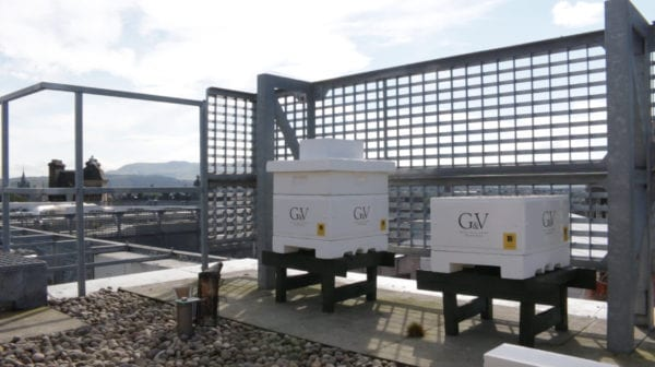 Rooftop Hives plan bee edinburgh hives hotel