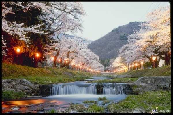 sakura japan 2