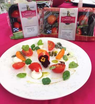 scotty brand tomato packs