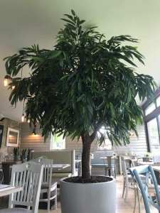The botany Maryhill Road glasgow foodie explorers