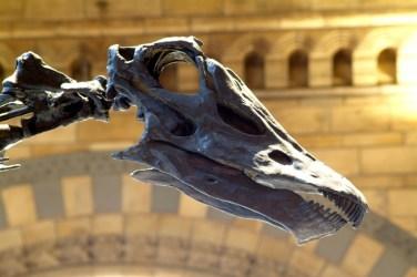 Dippy diplodocus natural history museum kelvingrove