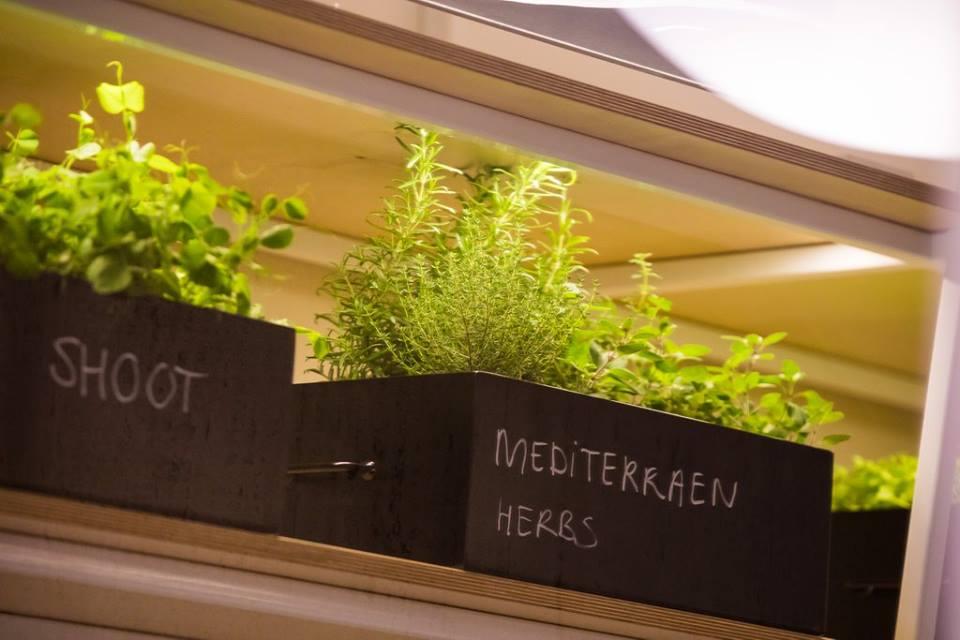 Verse kruiden The Fifth StayOkay Utrecht weekendje Utrecht on a budget Foodblog Foodinista