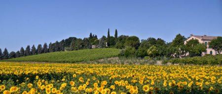 panoramica-girasoli-Collina-dei-Poeti