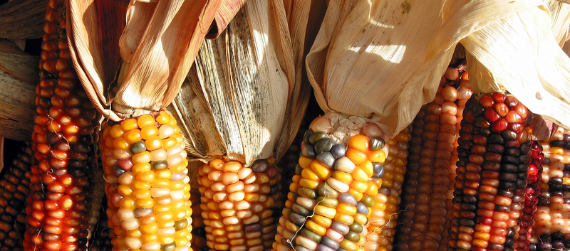 Colonization Food and the Practice of Eating  Food