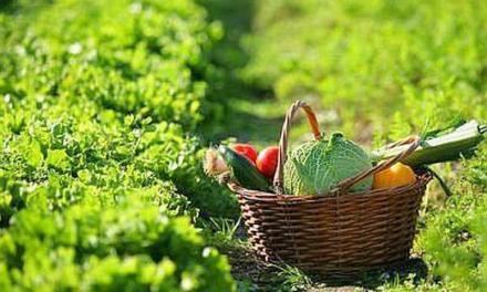 Green e crescita vanno a braccetto