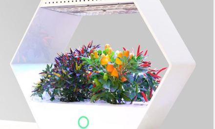 Robonica con Linfa la serra idroponica si può tenere in casa