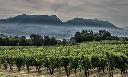 Aia delle Monache – una giovane realtà vitivinicola in Castel Campagnano