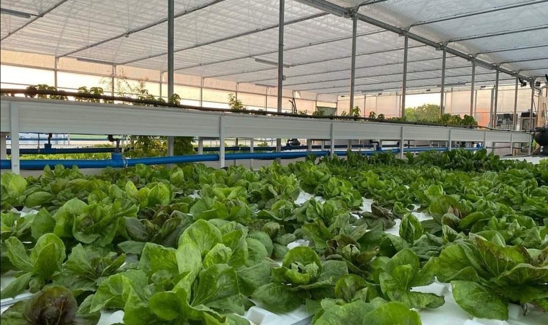 ACQUAPONICA MONtVERT, la rivoluzione green