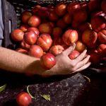 Viaggio nel mondo dell'agricoltura biologica