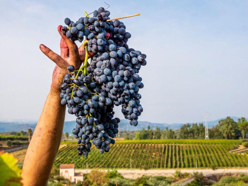 Annata 2020: vini di qualità in Sicilia grazie alla diversità e ricchezza dei territori