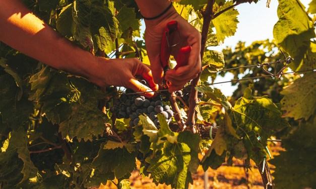 La Sicilia presenta a New York i vitigni autoctoni meno noti