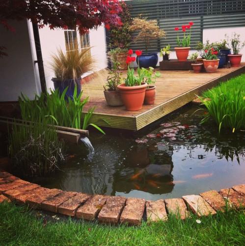 FoodNerd's Parents Garden