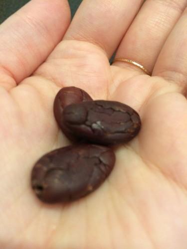 Cocoa Beans Peeled