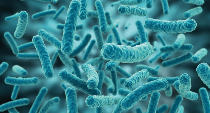 Probióticos: Lactobacillus acidophilus, Bifidobacterium, Lactobacillus sporogenes y Lactobacillus rhamnosus para la diarrea