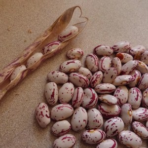 Cranberry (Borlotti) Beans
